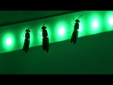 France 24:Watch: Dutch company generates buzz with massive new insect farm