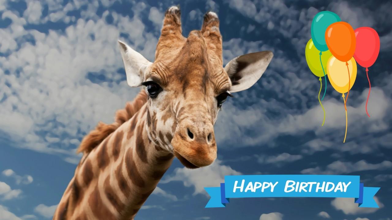 giraffe birthday Happy Birthday Giraffe   YouTube giraffe birthday