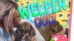 Zuckersüßes PUPPY Quiz!   Wer darf WELPEN kuscheln?