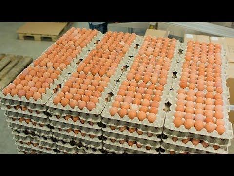 Die Eierlüge ARD Reportage & Dokumentation