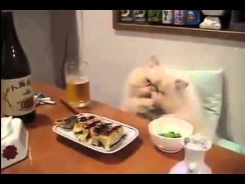 Кот - ленивец - YouTube
