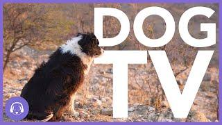 Dog TV: 12 Hours of Entertaining Dog Walks on The Beach! (2021)