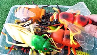Best Insect Toys For Kids Learn Insect Bugs Education Video - Learn Insects Names for Kids