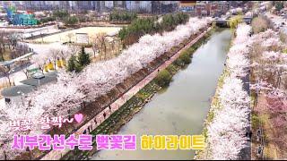 서부간선수로 벚꽃길 [하이라이트]썸네일
