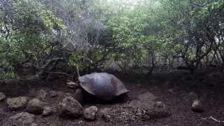 Emma G Adventures - Galapagos 2014