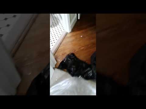 Water damage in Audubon NJ, window leak in Audobon NJ, SERVPRO,