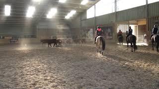 Tri de bétail 24 02 2019   1 - arrivée des vaches