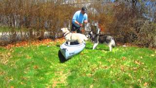 Getting A Dog Into A Kayak. Pawesomedogs.com