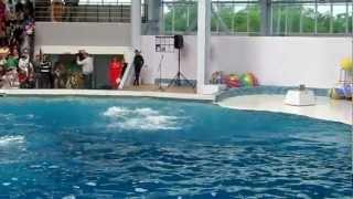 дельфинарий в Евпатории 2(, 2012-05-28T10:17:58.000Z)