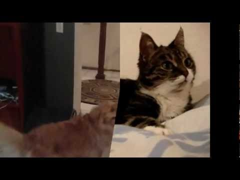 It's Gonna be a Good Night with Cats and Dogs (Cat and Dog Videos 2)