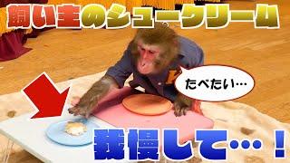 おやつ食べかけで飼い主がどこかへいった!→食べちゃおうか迷うお猿さんの葛藤が可愛いww