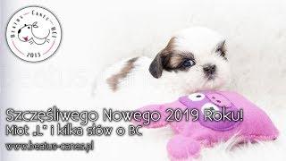 """Szczęśliwego Nowego 2019 Roku! - Miot """"L"""" - Kilka słów o BC"""
