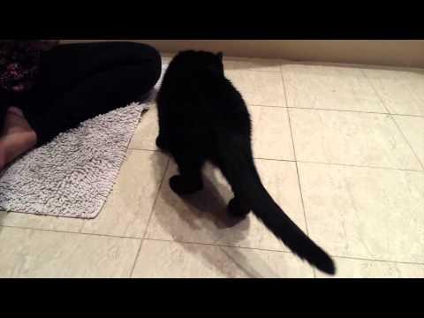 Pepper The Black Cat Doing Amazing Dog Tricks