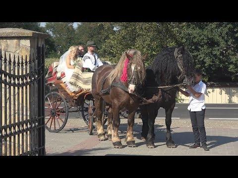 Nunta in Bucovina   Caleasca cu cai   Ilie Hutan 2017