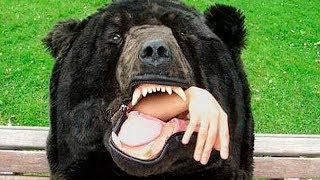 Слабонервным не смотреть . нападение медведей на людей