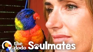 Wild Lorikeet Brings Girlfriend to Meet Human Mom | The Dodo Soulmates