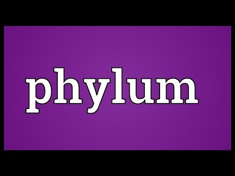Phylum Meaning