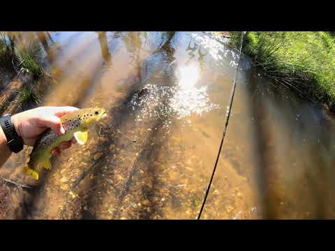 Brown Trout Fishing With Worms