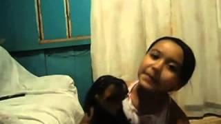 Rottweiler Puppy Biting Child
