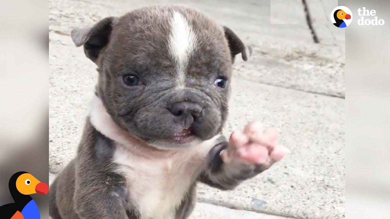 cleft lip dog