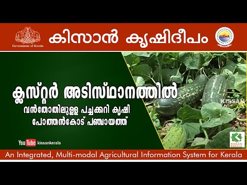 Large scale vegetable farming (cluster) scheme of the Dept. of Agriculture at Pothencode panchayath