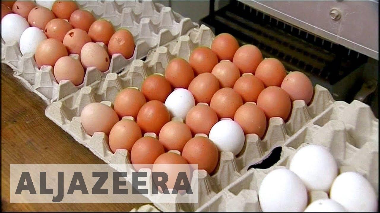 EU cracks down on Dutch eggs contaminated by pesticides