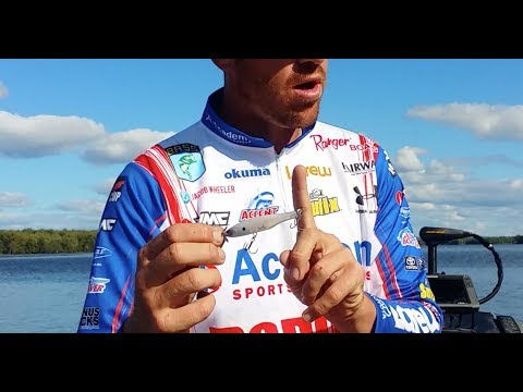Spinbait (spybait) all year for bass