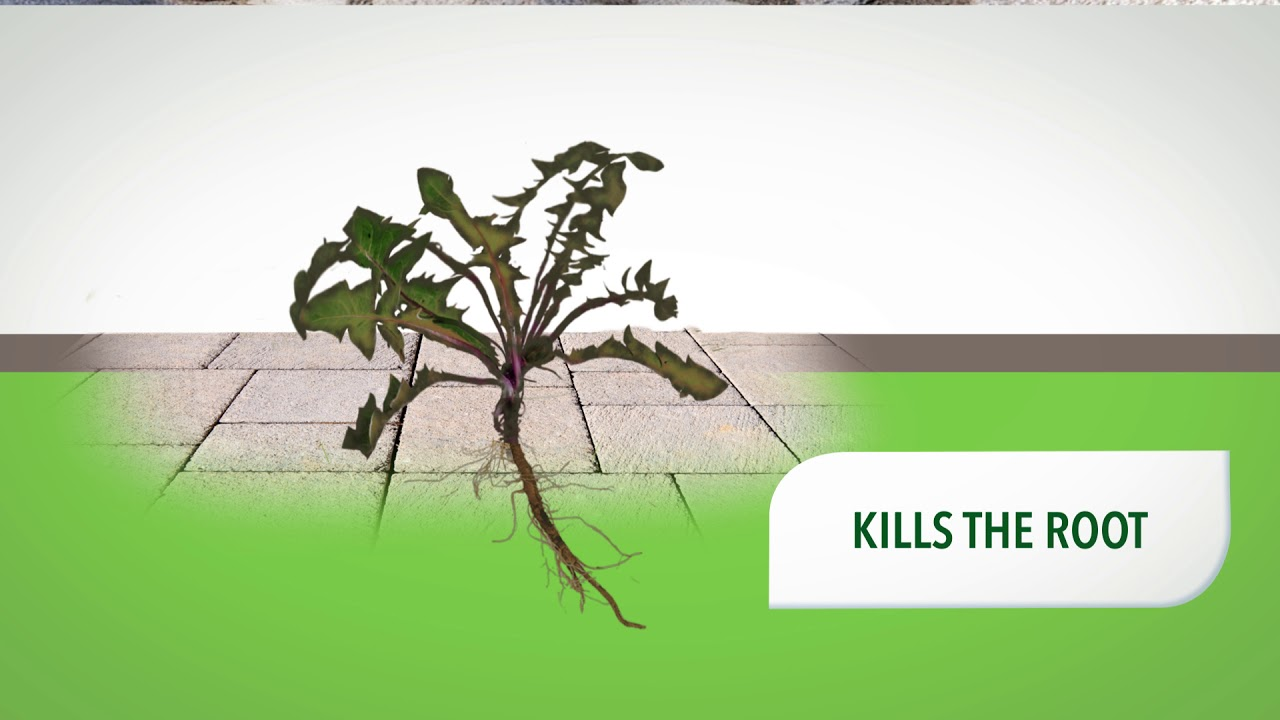 NATRIA GRASS & WEED CONTROL WITH ROOT KILL VIDEO HD 15