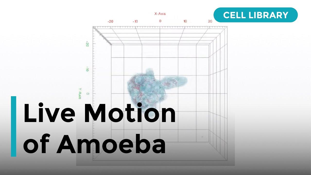 hight resolution of 3d label free imaging of amoeba movement