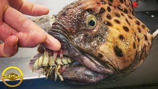 10 สิ่งมีชีวิตใต้ทะเลลึกสุดแปลกจนแอบขนลุก (สวย แปลก สะพรึง!!)