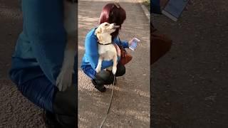 Собака по хозяйке скучака) Фокс встречает как с фронта))