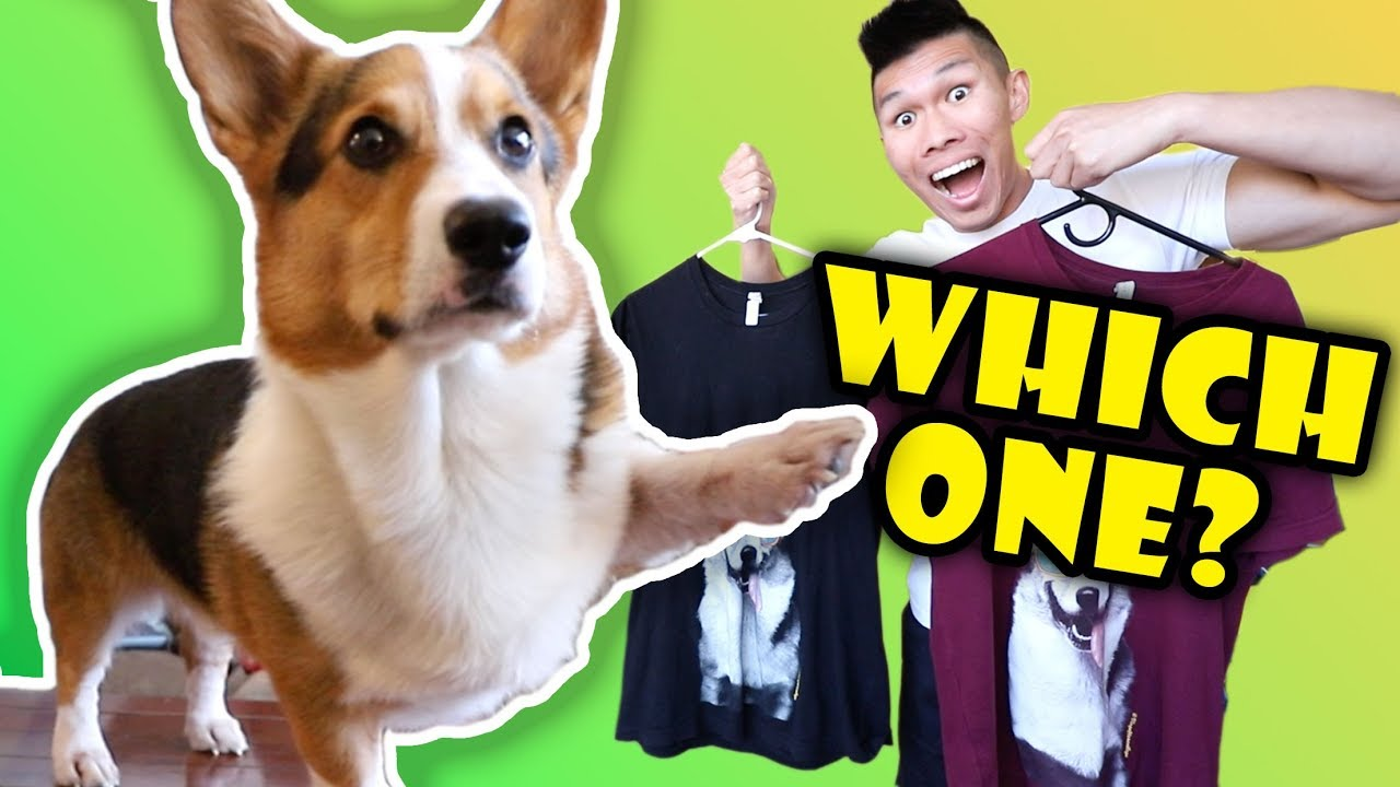 what-happens-when-corgi-decides-for-the-day-life-after-college-ep-612
