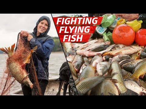 How Fishermen Are Fighting To Control The Asian Carp Population — How To Make It