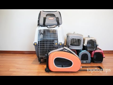 Best Dog Carrier: Hands-on Comparison of Many Different Brands