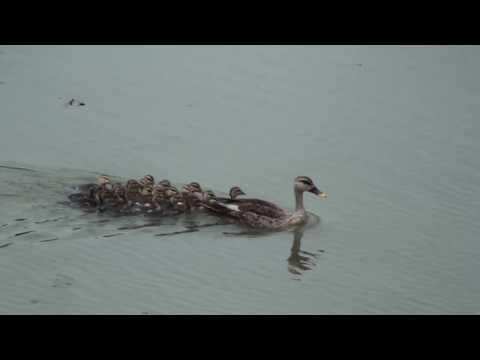 Uttarahalli lake Bangalore - A lake of recreation in south Bangalore