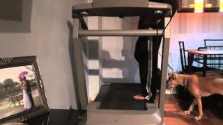 How To Introduce A Dog To The Treadmill - Dctk9 -dog Training
