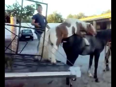 Mating Horses Breeding ~ HORSE MATING Most Funny Pony ...