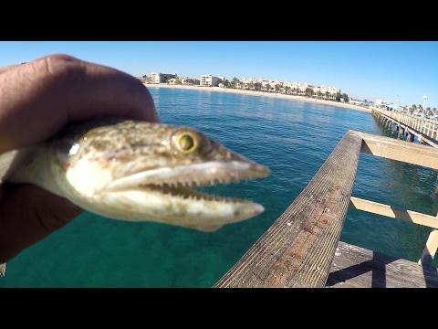 2 Hours Saltwater Multi-Species CHALLENGE (Lauderdale-by-the-Sea, FL)