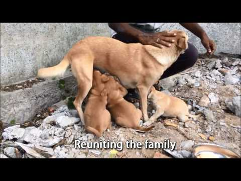 Puppies Rescued from a construction pit at Hitech City