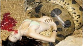 [Best Animal Fights]  [Wild Animal Attack]  When animals attack humans   men vs giant snake