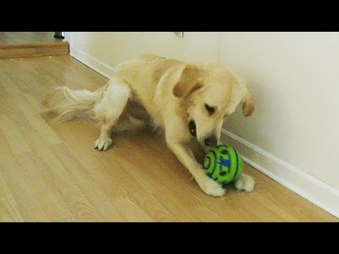 THE MOST ANNOYING DOG TOY IN THE WORLD! (Super Cooper Sunday #47)