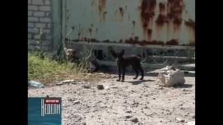 Бродячие собаки(По данным Всемирного общества защиты животных, из 500 миллионов собак, живущих на планете Земля, около 75 проц..., 2012-07-16T08:59:27.000Z)