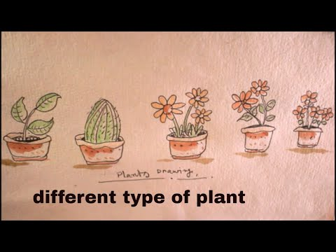 How TO Draw different type of plant/plant drawing for kids