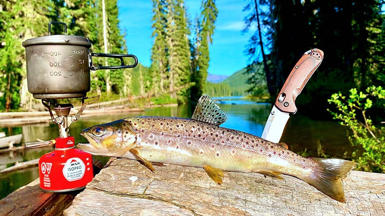 BROWN TROUT Fishing & SOLO Camping in REMOTE WILD!!! (Catch, Cook, Camp)