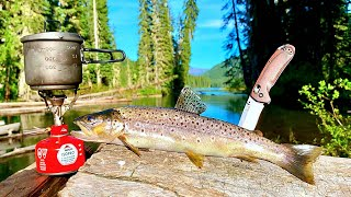 BROWN TROUT Fishing & SΟLO Camping in REMOTE WILD!!! (Catch, Cook, Camp)
