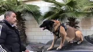 سنحاول تدريب الكلب كنج على تقصي اثر الانسان مع جمال العمواسي