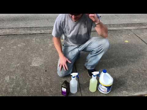 Sidewalk Mold, Bleach, vs Hydrogen peroxide test on Moldy sidewalk, see what happens.