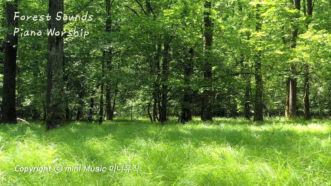 숲속 소리와 함께 듣는 피아노 찬양 (3시간) | Forest Sounds Piano Worship | 찬양 묵상 by 미니뮤직 (중간광고없음)