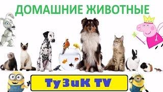 Домашние животные и их дети. Развивающий мультик про животных!
