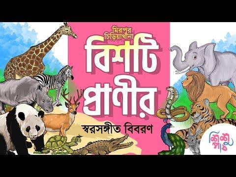 Animals Name In Bengali   ২০টি প্রাণীর রঙ্গিন চিত্র । মজার মজার প্রাণীদের ডাক